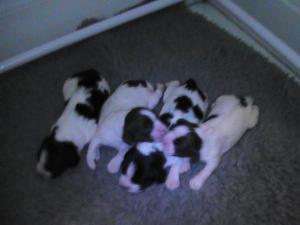 Pups at 7 days