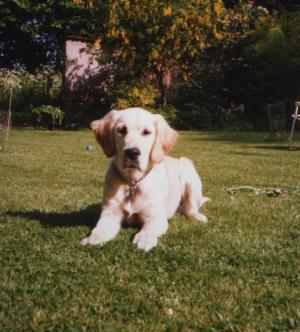 Sasha as a puppy