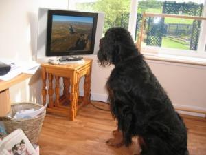 wembley enjoys the tv unfortunately no one else