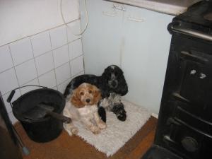 Obie with her friend Blackberry