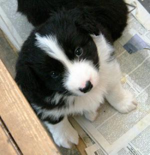 Kate at 5 weeks - who could resist!