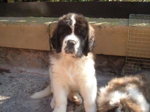 Mocha 6 weeks old