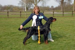 Margo Best Puppy In Show Gordon Setter Ass. Ch.Sh.