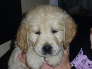 Kizzy 7 weeks old !