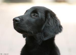 Mali headshot as puppy