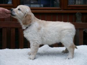 Millie at 6 weeks