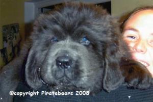 Merlin age 8 weeks