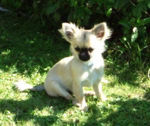 Amarantos Piper @ 5 months