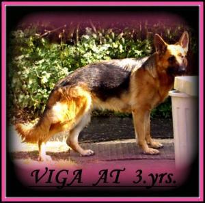 LINERN VIGA  AT  3.YRS.