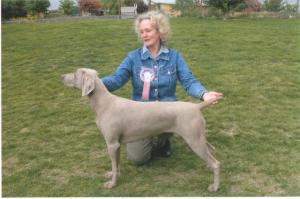 Best Puppy in Show - Mid Herts Gundog age 8 months